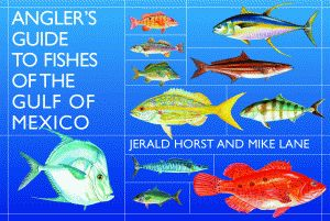 Gulf of mexico fish identification download foto gambar for Gulf of mexico fish identification